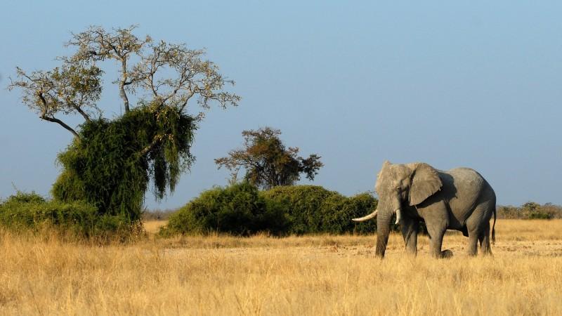 Ботсвана слон